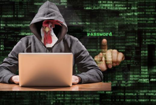hacker-in-a-henhouse- dos